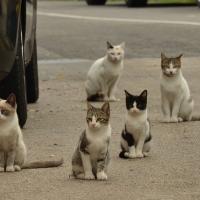 Cum tii la distanta pisicile din preajma blocului?