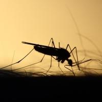 Tutorial de amplasare a aparatelor cu raze uv anti insecte
