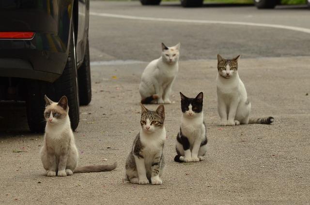 cum-scapi-de-pisici